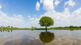 Time lapse footage video of moving clouds behind a single big oak tree stock footage