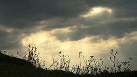 Time-lapse, grass waving against the background of moving clouds. Time laps, silhouettes of plants and grasses sway from the wind against the background of stock video