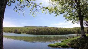 Time lapse of a green tree on the shore of a lake. Camera pan movement stock video