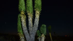 Time Lapse of Joshua Trees at Night - 4K. Time Lapse of Joshua Tree National Park stock video footage