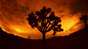 Time Lapse of Joshua Trees at Night  - 4K stock footage
