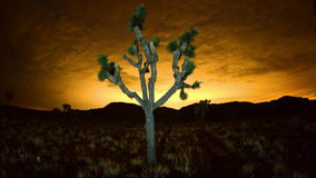 Time Lapse of Joshua Trees at Night  - 4K. Time Lapse for Joshua Tree National Park stock video footage
