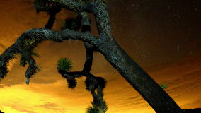 Time Lapse of Joshua Trees at Night  - 4K stock video footage
