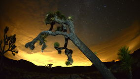 Time Lapse of Joshua Trees at Night stock video
