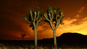 Time Lapse of Joshua Trees at Night stock footage