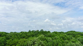 time lapse 4K: Nubes del cielo azul sobre el bosque del árbol almacen de metraje de vídeo
