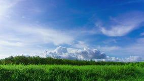 time lapse 4K: Paisaje verde del verano del campo almacen de video
