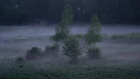 Time lapse of low hanging mist around trees over grass at night in the fields. Mysterious atmosphere in nature landscape stock footage