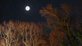 Time lapse moon fall trees stars stock video