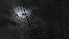 Time lapse of the moon glowing behind the clouds and tree stock video footage