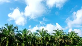 Time lapse, motion white clouds over palm tree. stock video
