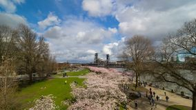 Time lapse of clouds over Portland OR downtown waterfront with Cherry Blossom trees springtime 4k. Time lapse of moving clouds and blue sky over Portland OR stock video