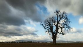 Time lapse - moving clouds over a horse chestnut in late autumn. Wetterau, Hesse, Germany stock footage