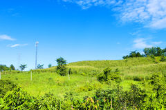 Time-lapse Nature_green grass blue sky stock footage