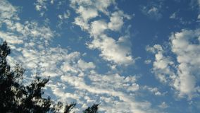 Time lapse of nice clouds movement with pine tree silhouette foreground stock footage
