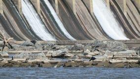 Time Lapse Otwarty Spillway przy Conowingo tamą Maryland zbiory