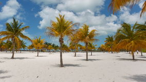 Time Lapse Palm trees at the Sirena beach stock video footage