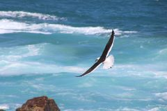 Time Lapse Photo of Soaring Bird Above the Sea Royalty Free Stock Photo