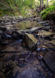 Time Lapse Photo of Stream on Green Forest Royalty Free Stock Image