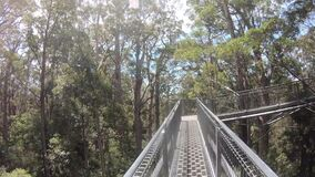 Time lapse POV of person walking on valley of the giants tree top walk