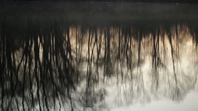 Time-lapse. Reflection of trees in the water at dawn stock footage