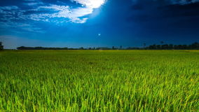 Time Lapse Rice Farm Stock Images