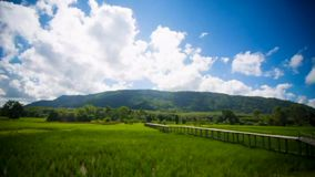 Time lapse rice field and cloud stock footage