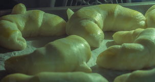 Time lapse of rising baking croissants in oven stock video footage