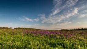 Time Lapse. Rostov region, Chulek Don steppe in purple
