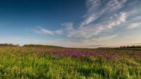 Time Lapse. Rostov region, Chulek Don steppe in purple stock video footage