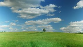 Lonely tree on green field against blue sky background. Time lapse shot of lonely tree on green field against blue sky background stock footage