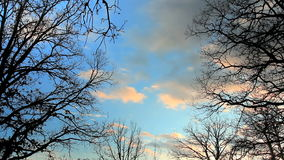 Time lapse of soft clouds through branches at sunset stock footage