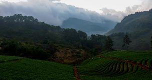 Time Lapse Strawberry fruit farm at Doi Ang Khang in Chiangmai, Thailand. stock footage