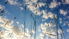 Time lapse of summer grass and clouds passing stock footage