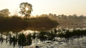 Time lapse of sunrise at lake with fog running and tree. Silhouette stock footage