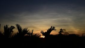 Time lapse of sunrise with tree silhouette. In morning stock footage
