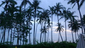 Time lapse sunrise. View of dawn of sun over sea through palm trees on beach, Bali, Indonesia stock footage
