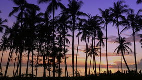 Time lapse sunrise. View of dawn of sun over sea through palm trees on beach, Bali, Indonesia stock video