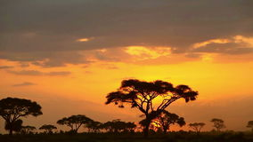 Time lapse Sunset in Amboseli Park stock video