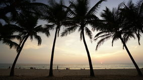 Time-lapse of sunset and coconut foreground stock video footage
