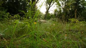 Time Lapse. Time is slow in nature. Slowing down time in the forest. Forest landscape. stock footage