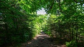 Time lapse trekking through summer deep highland forest at Carpathian mountains. Ukraine destinations travel background stock footage