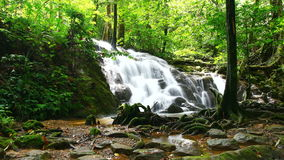 Time Lapse of tropical waterfall in deep forest, zoom in stock footage