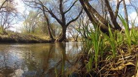 time lapse Una primavera del bosque en primavera ventoso metrajes