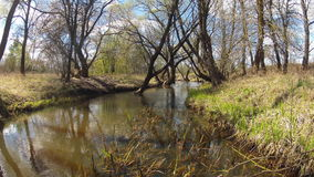 time lapse Una primavera del bosque en primavera ventoso almacen de metraje de vídeo
