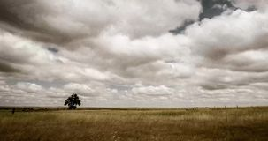 Lonely tree in Eastern Plains Colorado. A time lapse video of clouds moving above a lonely tree in the Eastern Plains, Colorado stock video footage
