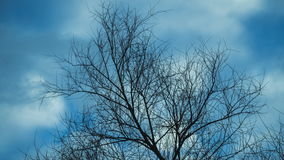 Time lapse video of leafless tree against cloudy sky