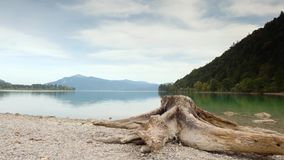 Time Lapse video of old white tree stump on beach of Alps lake. White gravel in bay. Raised camera view. Blue green water. Mirror of water level. Mountain stock video