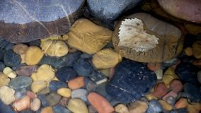 Time lapse video showing ice forming in shallow water. A time lapse video with water, rocks and an aspen leaf showing the formation of ice crystals as the water stock video footage