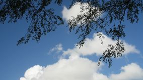 A time lapse video of the sky. Clouds drifting on a sunny day above tree branches.  stock footage